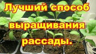 Самый лучший способ выращивания рассады