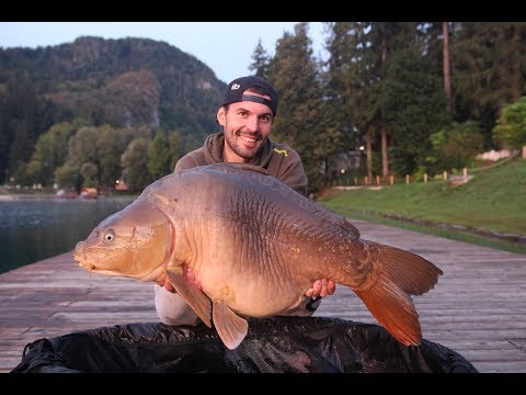 Carp fishing in Slovenian Bled
