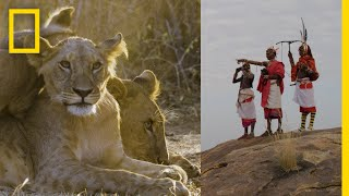 These Warriors Once Hunted Lions—Now They Protect Them | National Geographic