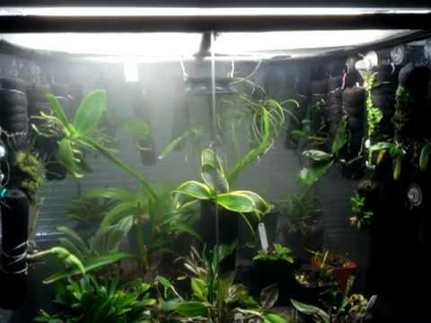 Orchid Vivarium 6 Months Youtube