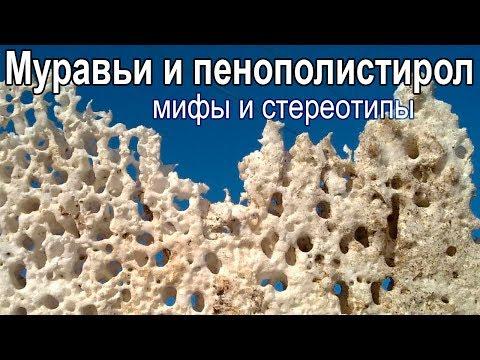 Пенопласт и муравьи