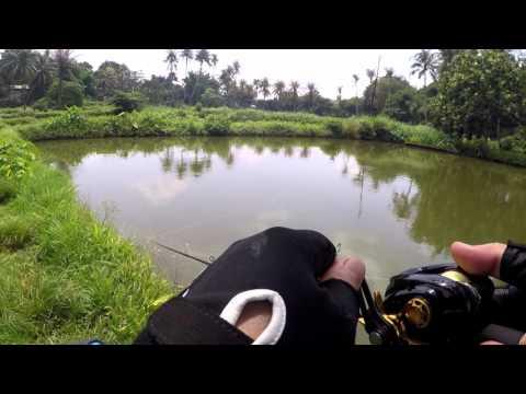 PDS FISHING 4 ( RCG )