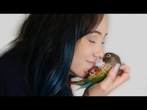 Things About My Green Cheek Conure I Absolutely Love