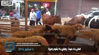 مصر العربية | الضاني بـ 42 جنيهًا.. والبقري بـ39 بشوادر الجيزة