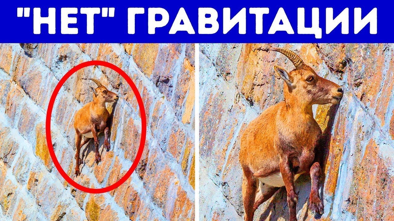 17 уникальных животных с суперспособностями