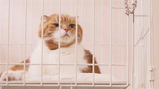 고양이가-스스로-케이지에-셀프-격리하다니