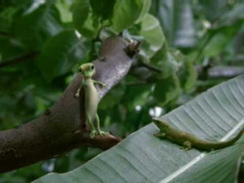 The GEICO Gecko Farts When Advertising