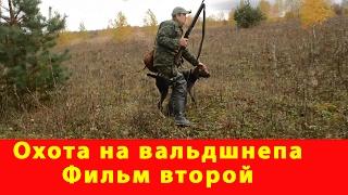 Охота на вальдшнепа с дратхааром в лесу отзыв арсенал