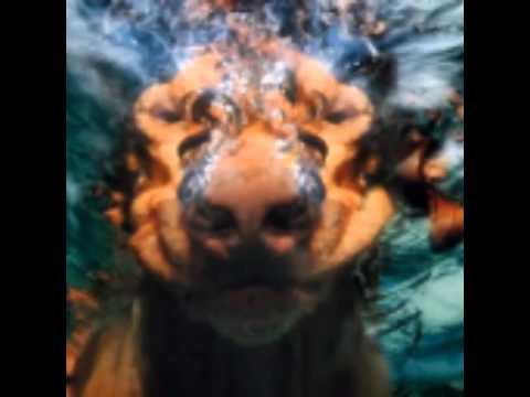 Hunde unter wasser youtube for Magic renov tout pret