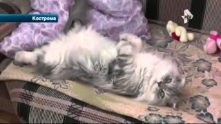 Заводчица подсовывала покупателям тяжело больных породистых котят в Костроме