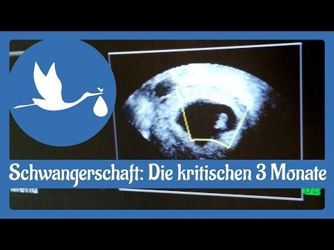 Schwangerschaft: Die Ersten 3 Kritischen Monate