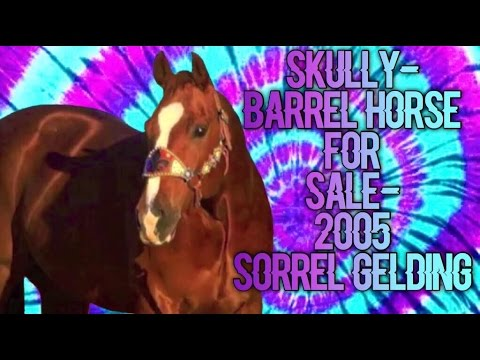 SKULLY - Barrel horse for sale - 2005 Sorrel Gelding!