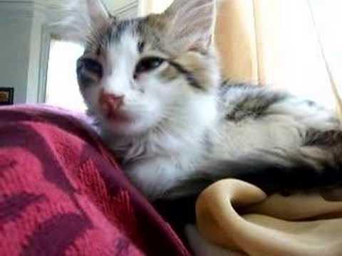 giving subcutaneous fluids to a cat
