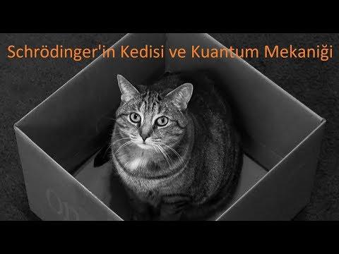 Schrödinger'in Kedisi ve Kuantum Mekaniği