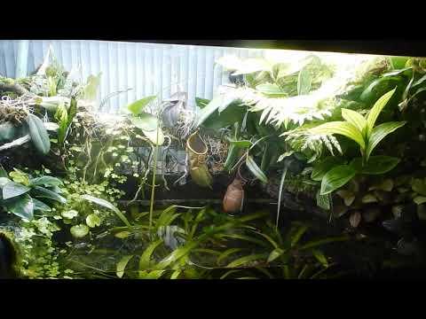 Фон делает аквариум.