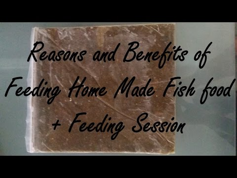 Benefits of Feeding Home Made or DIY Fish Food and Feeding Session