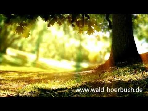 Wenn der Wald spricht 2 - Kapitel 08 - Verstrickungen
