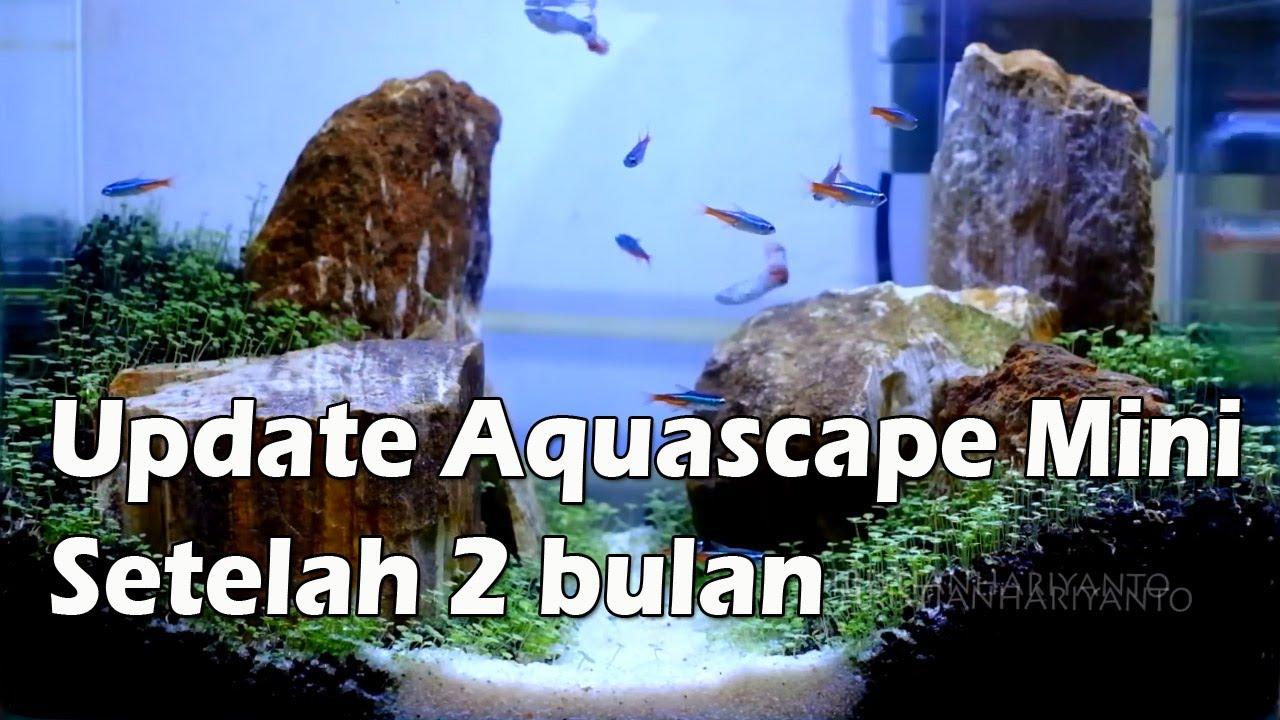 Update Mini Aquascape Setelah 2 Bulan By Christian Hariyanto