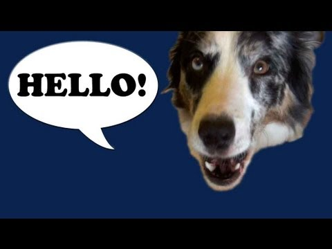 Talking dog- Splash says Hello!!!!!!!! plus puppies talk!
