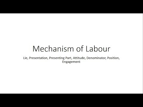 Basics in Mechanism of Labour - Obstetrics for Medical Students