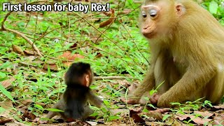 First lesson for baby Rex! Rose start teach Rex to learn walk, She left Rex & show him walk to her