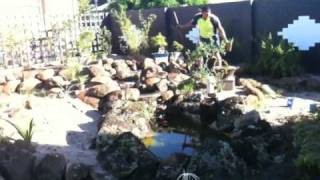 Japanese Garden 1 - Bundaberg Lifestyle Solutions