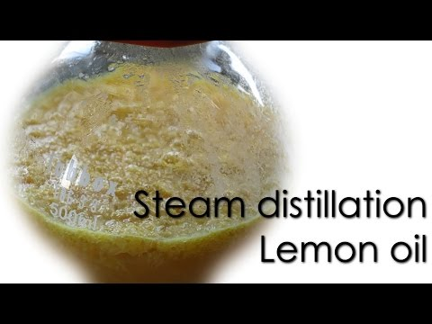 Steam Distillation - Lemon Essential Oil 🍋