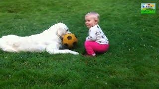 Lagu anjing kecil heli guk guk guk - kumpulan lagu anak ceria