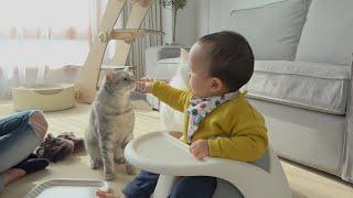 고양이들이 처음으로 아기를 만났어요!