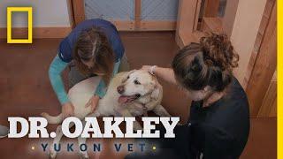 An Elderly Dog Gets an Exam | Dr. Oakley, Yukon Vet