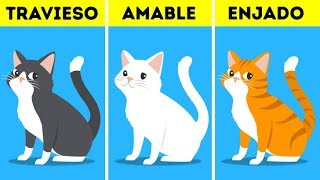 ¿Qué dice el color del pelaje de tu mascota acerca de su personalidad