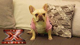 Dogglebox: Aubrey predicts who