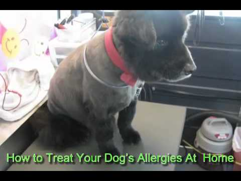How to Treat Your Dog's Allergies At Home