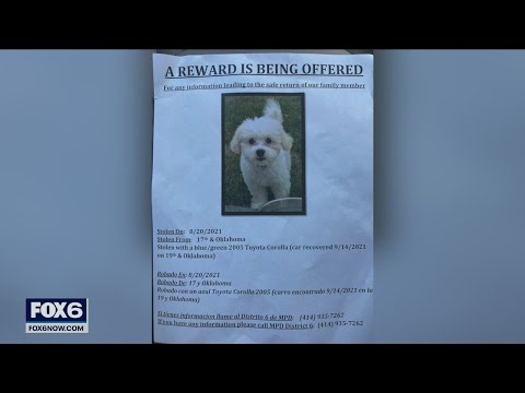 Oak Creek family searches for stolen puppy   FOX6 News Milwaukee