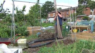 Sean's Allotment Garden #20: Runner beans and onions | June 2013