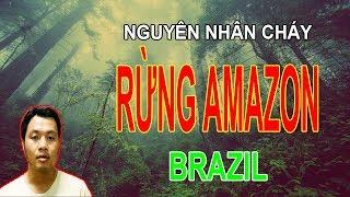 AndeZ - NGUYÊN NHÂN CHÁY RỪNG AMAZON Ở BRAZIL