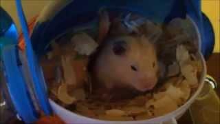Lapin et hamster amis pour la vie!!