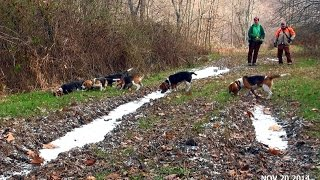 Skyview's Beagles Invite From Scott Kuthy Great Day Of Rabbit Hunting