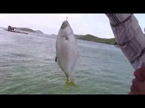 Đào được con này câu cá biển thì giật đã tay