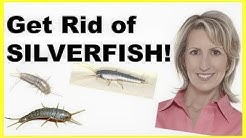 HOW TO GET RID OF SILVERFISH - NATURALLY & EASILY