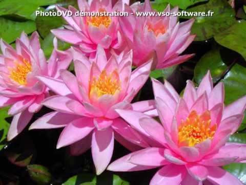 Vts 01 1 diaporama fleurs roses paysages et nature youtube - Initiatives fleurs et nature ...