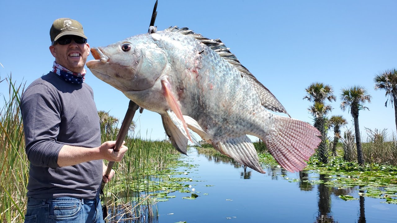Spearing HUGE Tilapia & Armored Catfish! Tilapia Catch & Cook and Fishing for Barramundi