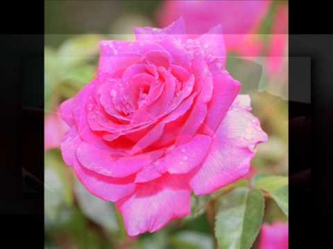 LeAnn Rimes - Some Say Love_The Rose