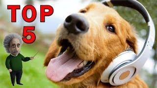 Jsou to psí géniové, atleti, artisti, i herci. Dávat pac, aportovat...