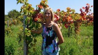 Гоним на виноградники и родники #Гостагаевская #Анапа