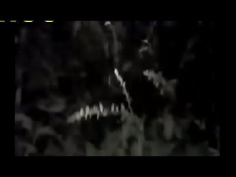 СТРАШНЫЕ СУЩЕСТВА ЗАСНЯТЫЕ в ЛЕСУ  Ч-2 (Привидения,Оборотень и охота на Слендермена)