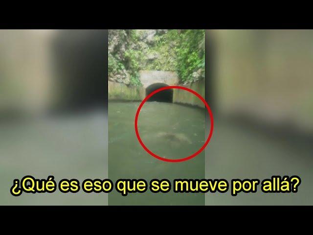 ¿Sirena o Fantasma? Extraña Criatura en Canal de Riego en Puerto Rico