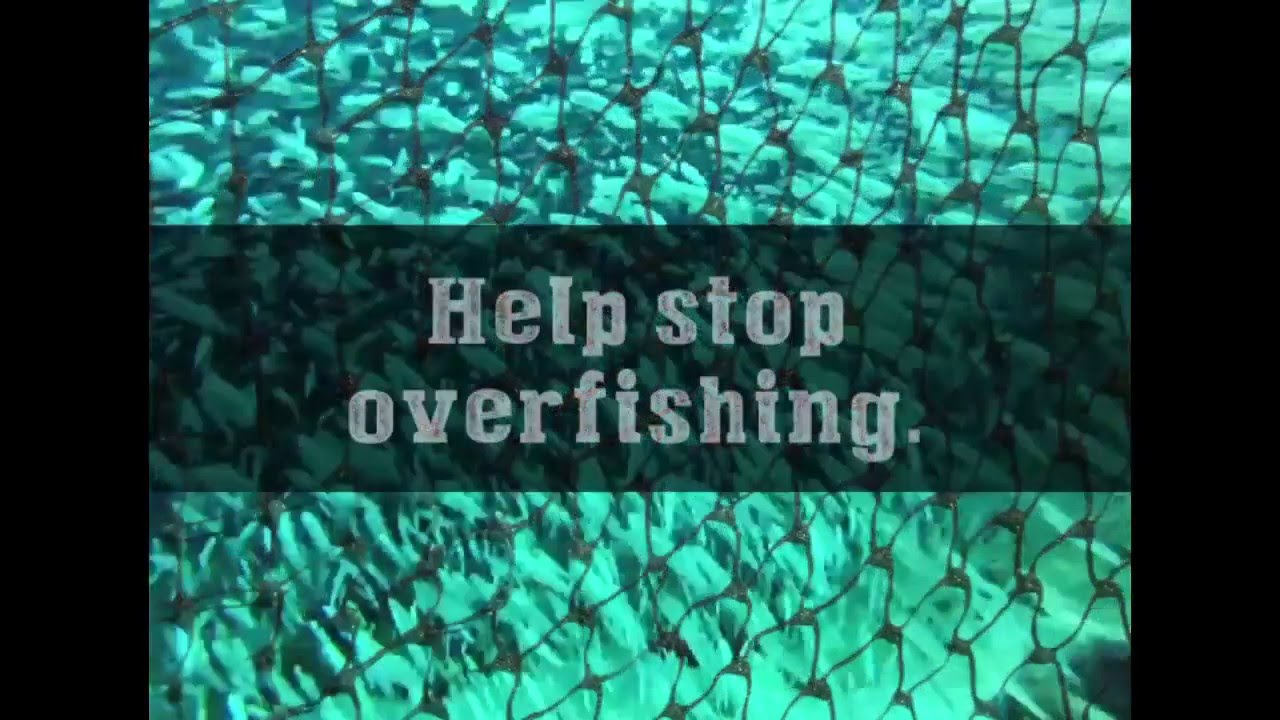 """how to stop overfishing Letters: overfishing is """"a good deal"""" only for the short-term interests of the smallest but wealthiest sector of the fishing industry  reduce eu quotas to stop overfishing letters."""