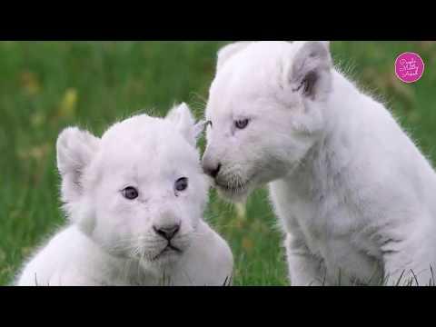 List of 25 Rarest Animals in the World | Rare Animals