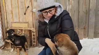 Городской приют для бездомных животных г. Новосибирска